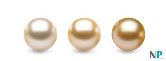 Colori delle perle Gold Australiane e Filippine