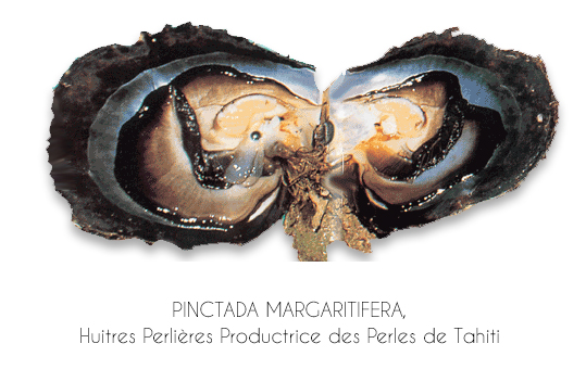 Huitre perliere des perles de Tahiti